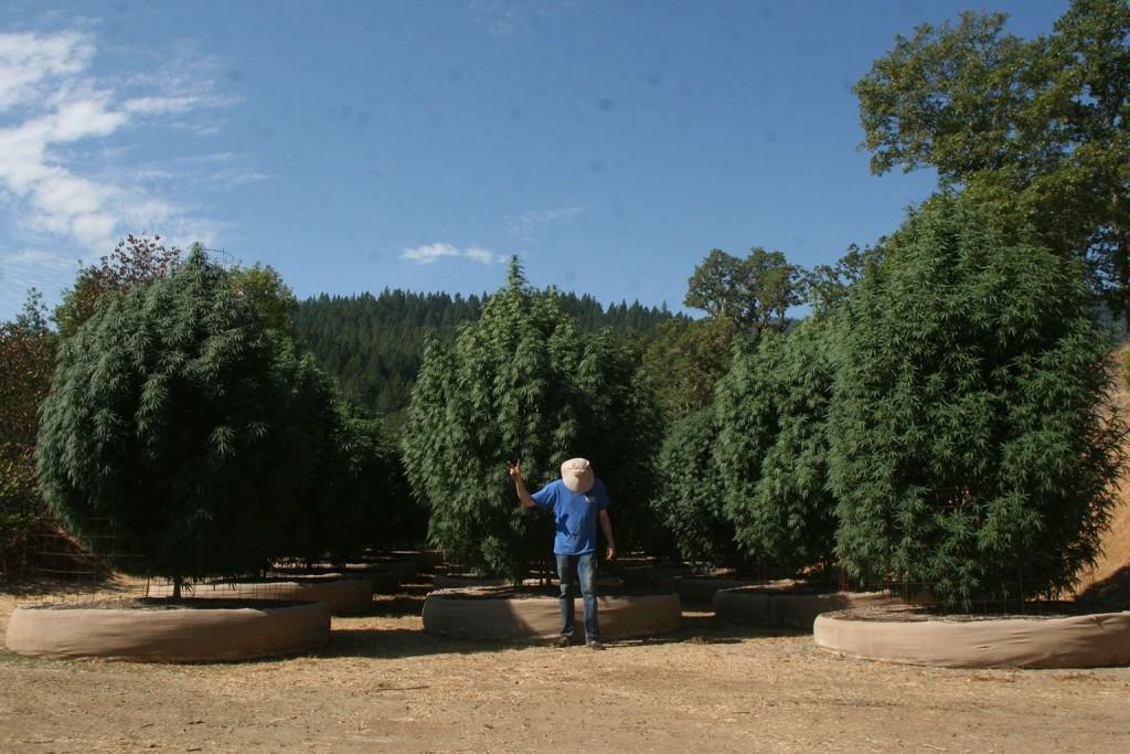 Mendo Seeds garden 2014